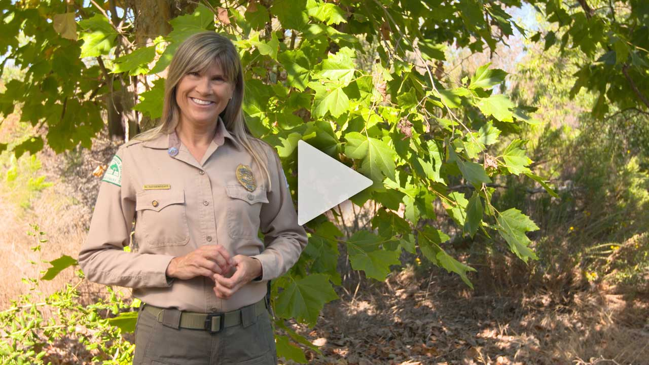 Watch Native Trees of Mission Trails Regional Park